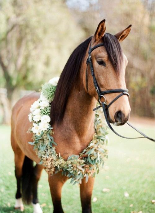 animales en las boda14