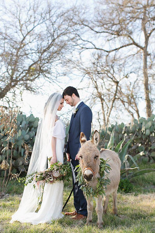 animales en las bodas16