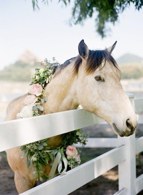 animales en las bodas18