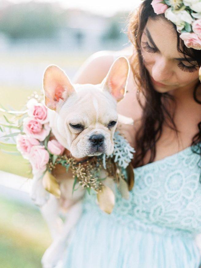 animales en las bodas19