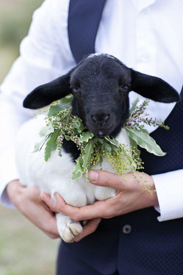 animales en las bodas21
