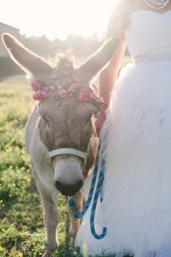 animales en las bodas24