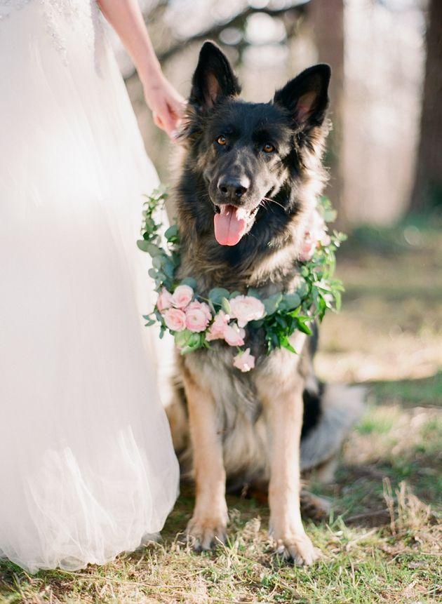 animales en las bodas25