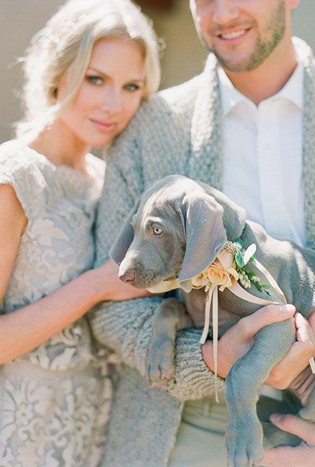 animales en las bodas4