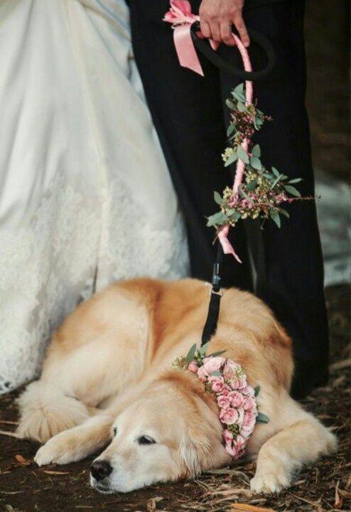 animales en las bodas5