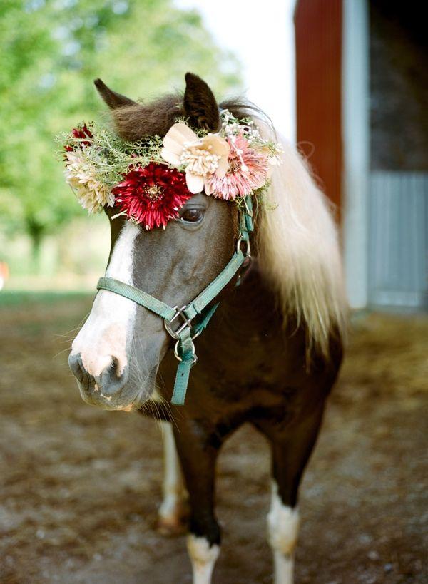 animales en las bodas6