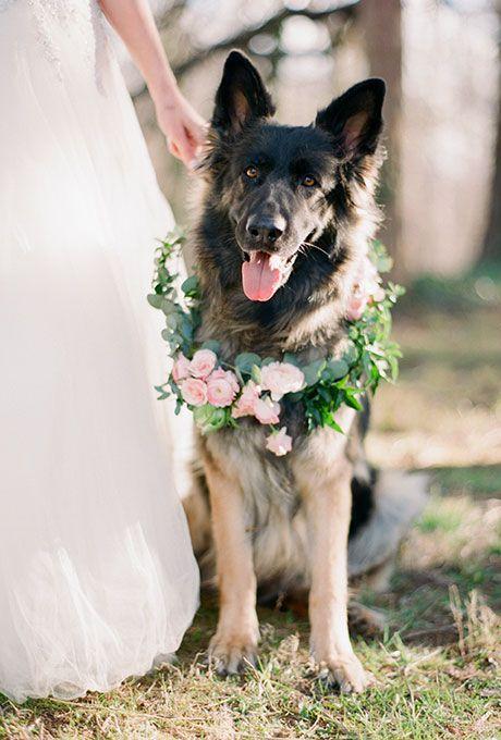 animales en las bodas7