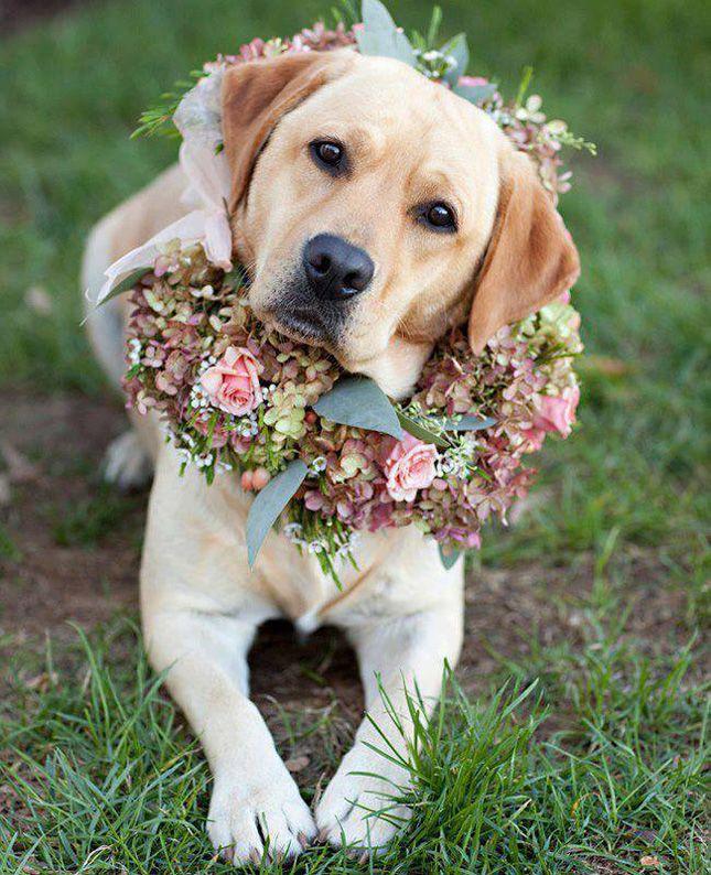 animales en las bodas8