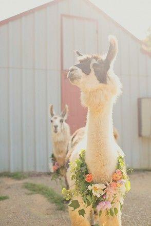 animales en las bodas9