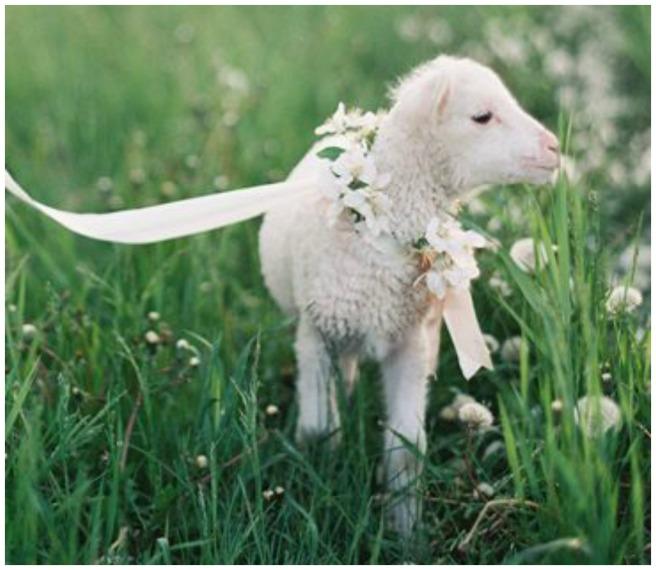 mascotas en las bodas4