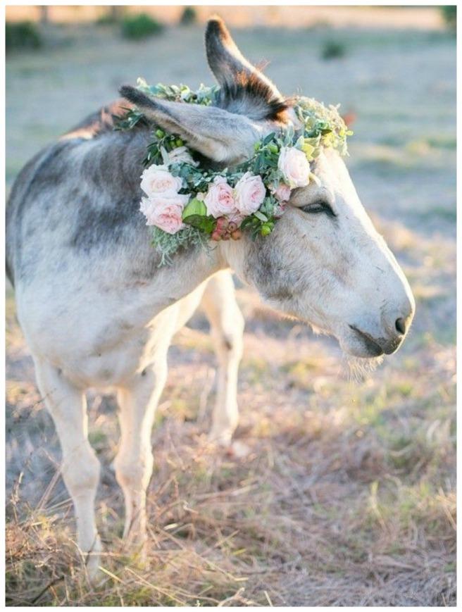 mascotas en tu boda2